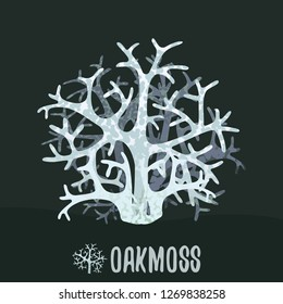 Oakmoss or tree moss (Evernia prunastri). Botanical illustration. Vector design element.