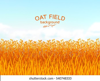 Oat field and blue sky background.  Colorful vector illustration.