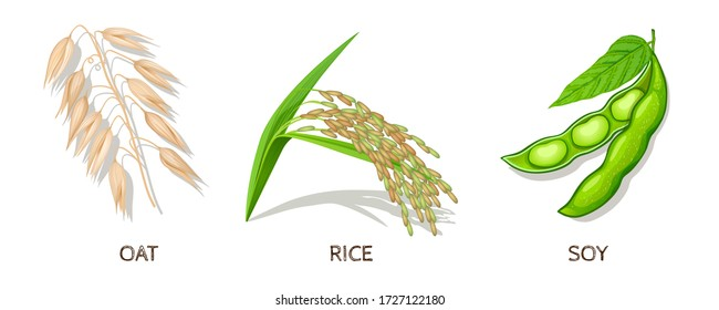 Oat, Rice, Soy-Set. Vector Illustration