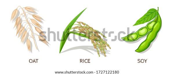 Oat, Rice, Soy-Set. Vector Illustration