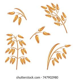 Oats collection set. Vector