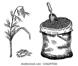 Oats, grain in sack and ear of oats, plant. Vector sketch illustration. Hand drawn isolated design elements.