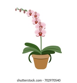 Object pink orchid in flower pot, vector