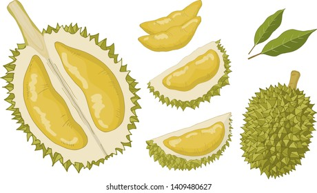 Objects isolated on white background. Durian in different forms: whole, peeled, flesh.