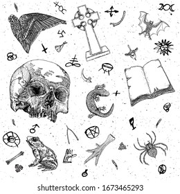 Occult witch magic design elements set. Hand drawn witchcraft mystery symbols, bird wing, grave stone, cross, vampire bat, human skull, lizard, book, toad, frog, chicken foot, poison spider. Vector.