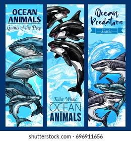 Ocean animal and sea predator sketch banner set. Shark, killer whale or orca, hammerhead shark, blue and sperm whale marine mammal animal poster for zoo aquarium and underwater wildlife themes design