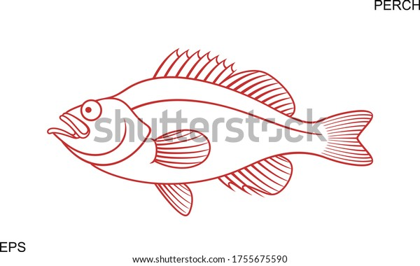 Ocean Perch outline. Isolated ocean perch on white background