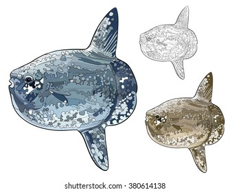 The ocean sunfish or common mola, vector image