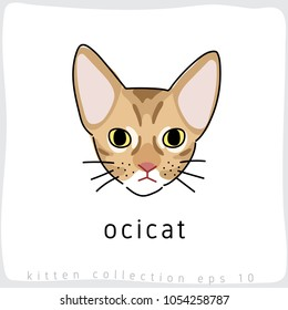Ocicat : Cat Breed Collection : Vector Illustration