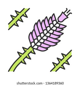 Ocotillo color icon. Fouquieria splendens. Exotic flower. Thorny blooming plant. Isolated vector illustration