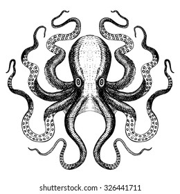 Octopus - Hand Drawn Sea Monster