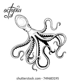 Octopus. Seafood. Vector illustration. Isolated image on white background. Vintage style.