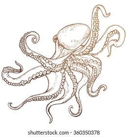 octopus sketch hand drawn illustration