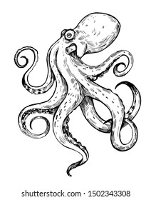Octopus sketch. Hand drawn outline converted to vector