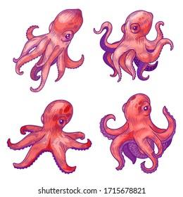 Octopus, sketch, ocean animal, undersea kraken and underwater creature, vector cartoon illustration. Hand drawn color sketch octopus, seafood, hand, marine oceanarium or tattoo design