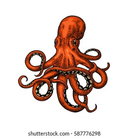 Octopus. Vector color engraving vintage illustrations. Isolated on white background.