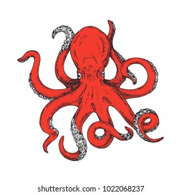 Octopus. Vector illustration of colored octopus hand drawn, vintage. Kraken Tattoo or print for t-shirt, poster or logo. Gigantic octopus vector ink sketch. Isolated on white background