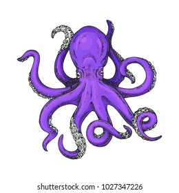 Octopus Vector Illustration. Octopus marine shirt print. Kraken Tattoo or print for t-shirt, poster or logo. Gigantic octopus vector ink sketch.