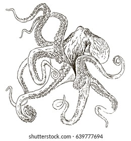 octopus vintage on white isolated, hand drawn illustration