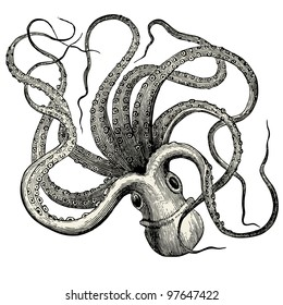 "Octopus (octopus vulgaris) - vintage engraved illustration - ""Dictionnaire encyclop�©dique universel illustr�©"" By Jules Trousset - 1891 Paris"