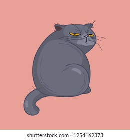offended British fat cat sits back, looking grimly on a pink background
