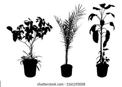 Office and house plant silhouette. Set of flowers in pots isolated on white background. Vector illustration.