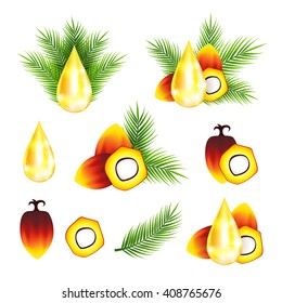 Oil palm fruits with drops and leaves. Vector illustration