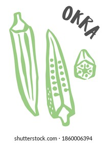 Okra drawing hand painted with ink brush isolated on white background. Vector illustration
