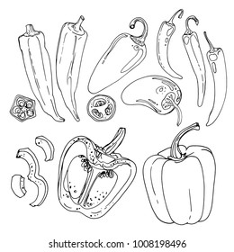 Okra, Jalapeno Pepper, hot pepper, paprika drawn by a line on a white background. A sketch of food. Vector drawing of spices
