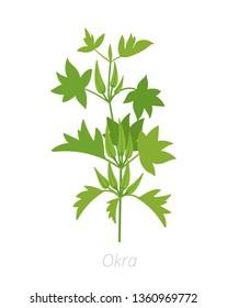 Okra plant. Harvest vegetable. Abelmoschus esculentus. Agriculture cultivated plant. Green leaves. Flat vector color Illustration clipart.