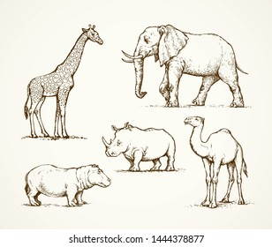 Old africana big powerful ungulate tropical jungle fauna beast isolated on white background. Freehand outline ink drawn picture sketch in art doodle style pen on paper. Side view with space for text