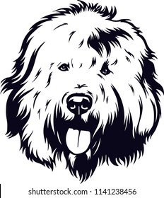 Old English Sheepdog dog breed pet