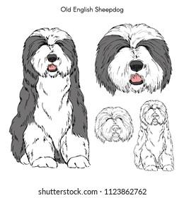 Old English Sheepdog illustration, dog breeds