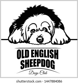 Old English Sheepdog - vector illustration for t-shirt, logo and template badges