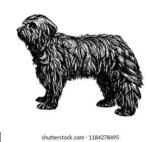 Old English Shepherd Bobtail dog vintage vector hand drawn illustration
