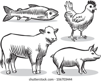 Old fashioned etched style illustration of livestock animals (cow, chicken, pig, fish).