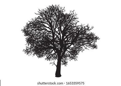 Old oak tree silhouette in Wokingham, Berkshire UK