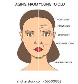Old and young face of a woman. Wrinkled and smooth face. Names of facial wrinkles and folds