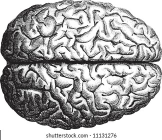Old-time engraving of the Brain