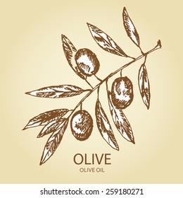 olive branch. hand drawn