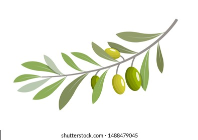 Olive branch tree isolated leaf. Olive food green branch plant illustration.