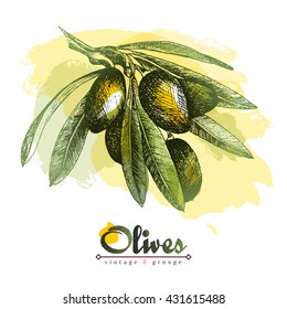 Olive branch vector colourful isolated illustration with watercolor spots, sketch hand drawn style, olives, leaves, lettering.