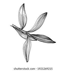 Olive branches isolated. Olive sketch element. Vector hand drawing wildflower for background, texture, wrapper pattern, frame or border.