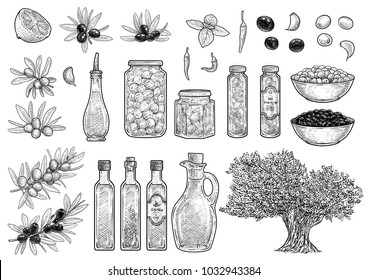 Olive collection illustration, drawing, engraving, ink, line art, vector