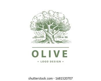 Olive label, emblem design. Olive tree llustration