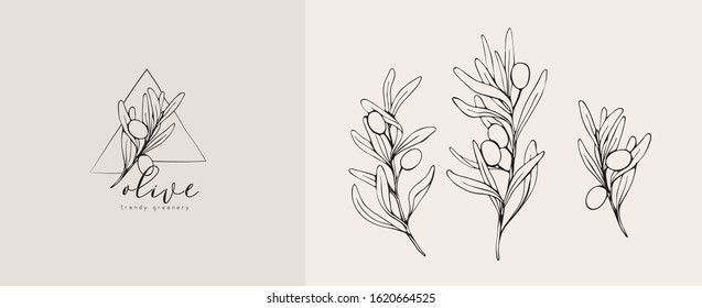 Olive logo and branch. Hand drawn wedding herb, plant and monogram with elegant leaves for invitation save the date card design. Botanical rustic trendy greenery vector illustration