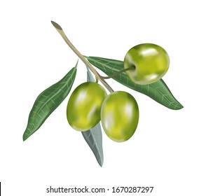 Olive oil with branch. Realistic 3d fruits.