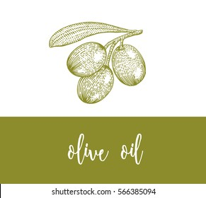 olive oil, green olive branch with berries