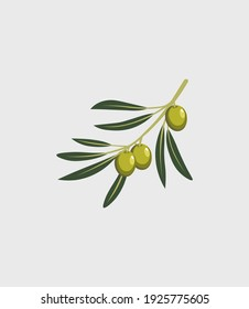Olive oil label or logo for a farm shop or market. Olive branch with leaves and olives. Retro organic olive oil logo vector illustration isolated on white background.