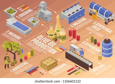 Olive oil production process isometric infographics from harvesting to bottling with centrifugal press and separation vector illustration
